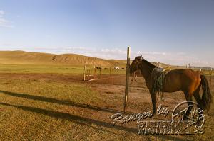 Mongol00045