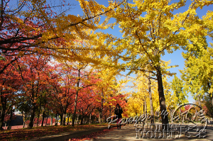 autumn-color00008
