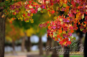 autumn-color00014