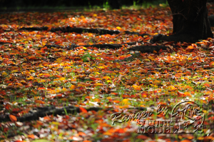 autumn-color00015
