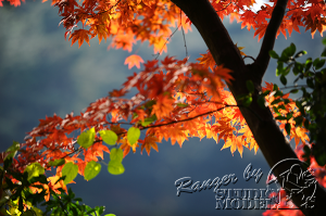 autumn-color00016