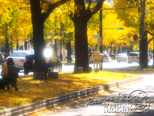autumn-color00020