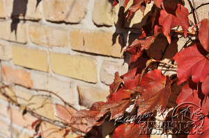autumn-color00030