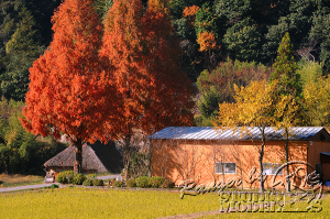 autumn-color00050