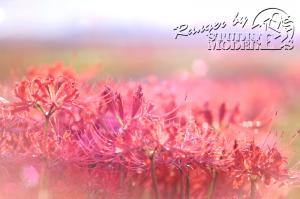 flower102