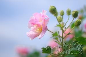 flower47