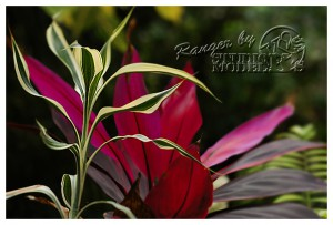 flower52