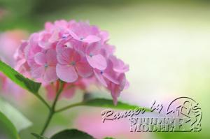 flower68