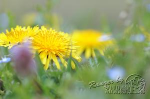 flower70