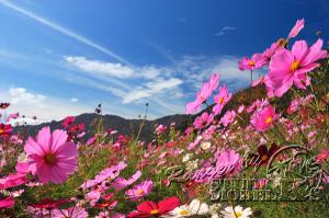 flower79