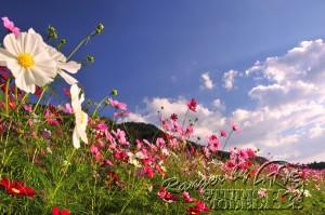flower80