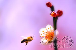 flower85