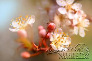 flower96