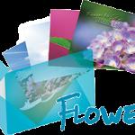 《Flower》  Ranger's Photo Gallery