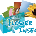 《Flower and insect》 Ranger's Photo Gallery