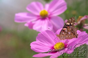 flower&insect052