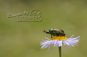 flower&insect051