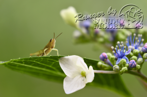 flower&insect049