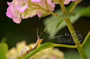 flower&insect048