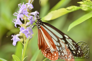 flower&insect046