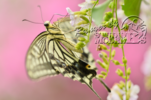 flower&insect045