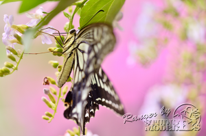 flower&insect044
