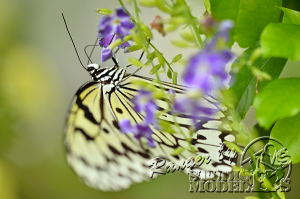 flower&insect041
