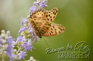 flower&insect034