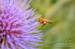 flower&insect032