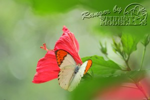 flower&insect026