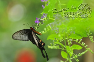 flower&insect025