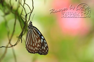 flower&insect024