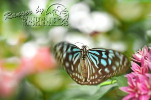 flower&insect023