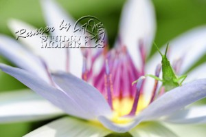 flower&insect058