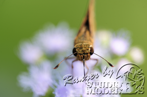 flower&insect018