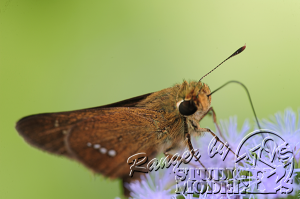 flower&insect017