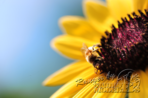 flower&insect015