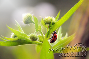 flower&insect013