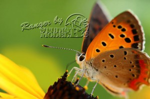 flower&insect057