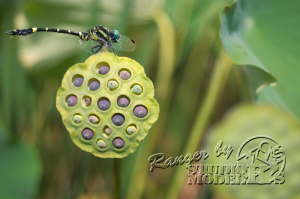 flower&insect012