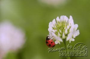 flower&insect011