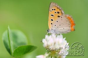 flower&insect008