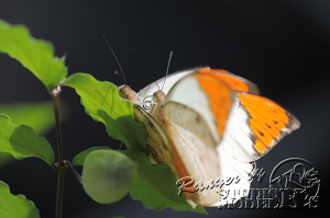 flower&insect004
