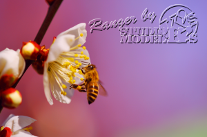 flower&insect003