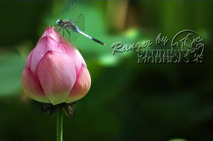 flower&insect056