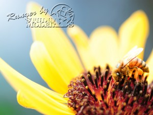 flower&insect001