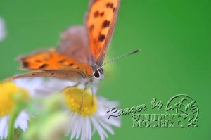 flower&insect055