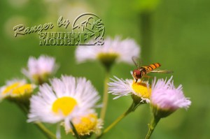 flower&insect054
