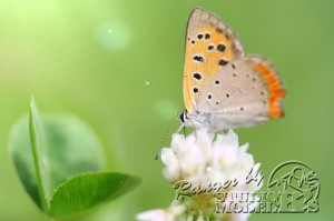 flower&insect053