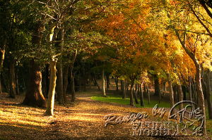 autumn-color00009